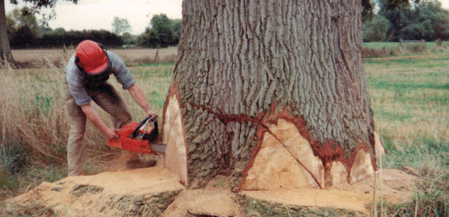early days as a forestry contractor