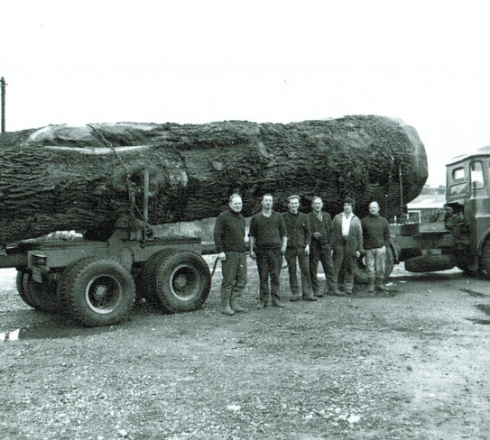 delivering a felled oak tree in the early days of radnor