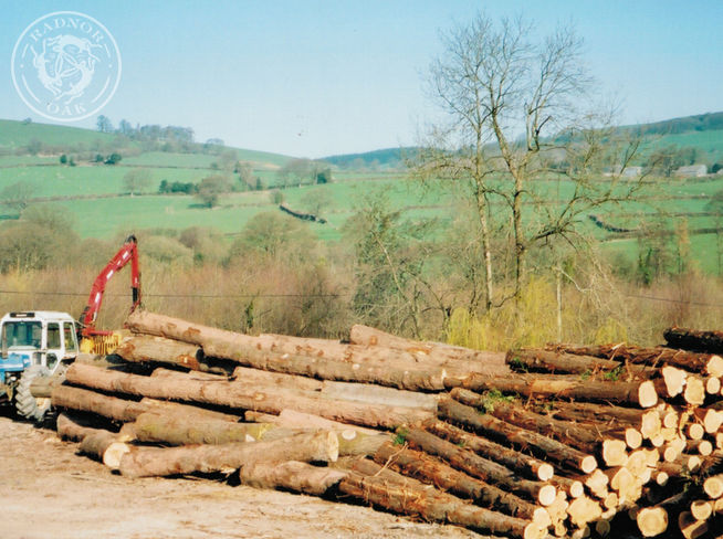 Stack of logs awaiting to be machined and processed